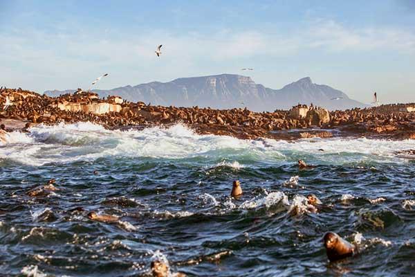 ☆ Visitar la isla Robben en Sudáfrica
