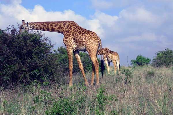 ☆ Visitar el Parque Nacional de Nairobi en Kenia