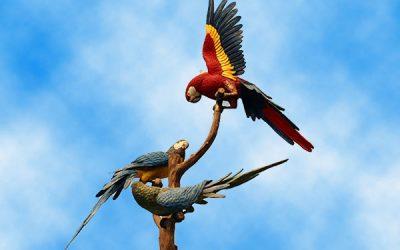 ☆ Ticket Loro Parque Tenerife, el espectacular zoo de Canarias en España