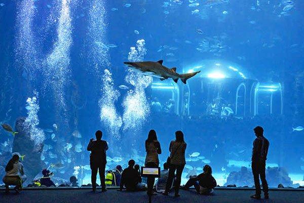 ☆ Visitar Poema del Mar Aquarium en Las Palmas de Gran Canaria en España