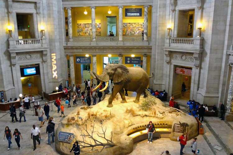☆ Visitar el Museo Nacional de Historia Natural de Washington en Estados Unidos